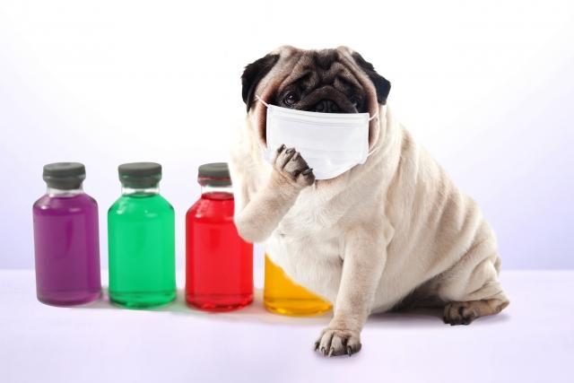 インフルエンザが警報レベル超え。